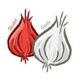 Shallots and Garlic Stock Image