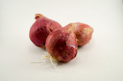 Shallots grow. Shallot roots grow become leek in future.shallots center and white background Stock Image