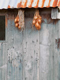 Shallots hung out to dry Royalty Free Stock Images