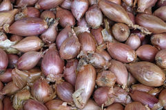 Shallots at the market Stock Images