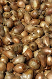Shallots at the market Stock Photography