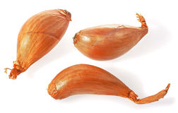 Shallots onion. Stock Photos