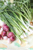 Shallots and onions Royalty Free Stock Images