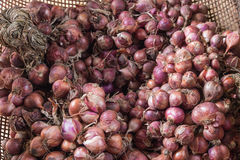 Shallots Stock Images