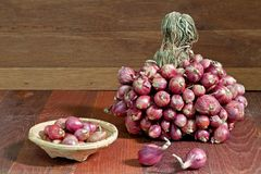 Shallots. Sere in the wood Royalty Free Stock Photos