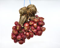Shallots Royalty Free Stock Photography