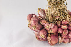 Shallots in white background Stock Image