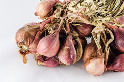 Shallots in white background Royalty Free Stock Image