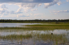 Shallow backwater on a northern lake Stock Photo