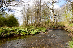 Shallow brook meandering through the countryside Stock Photography