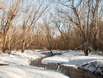 Shallow brook in the winter forest Stock Photos