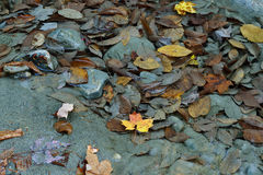 Shallow clear waters with Autumn leaves stock image