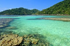 Shallow coral. At Moo koh surin nation park in thailand Stock Photography