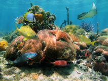 Shallow coral reef stock image