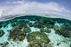 Shallow Coral Reef and Blue Sky Royalty Free Stock Photography
