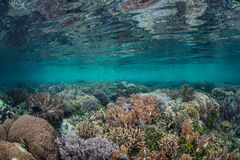Shallow Coral Reef 3 Royalty Free Stock Photo