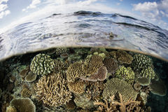 Shallow Coral Reef in Fiji Royalty Free Stock Photos