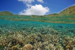 Shallow coral reef with fish below water surface Royalty Free Stock Image