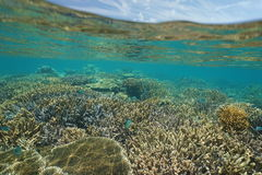 Shallow coral reef with fish New Caledonia. Shallow coral reef with fish underwater and sky with clouds above waterline, New Caledonia, south Pacific ocean stock image