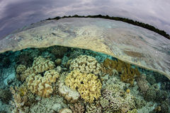 Shallow Coral Reef in Indonesia Stock Photos