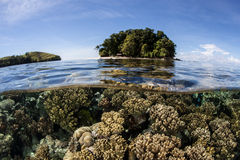 Shallow Coral Reef and Island Stock Photography