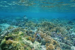 Shallow coral reef Pacific ocean French Polynesia royalty free stock image