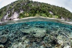 Shallow Coral Reef in Raja Ampat Stock Image