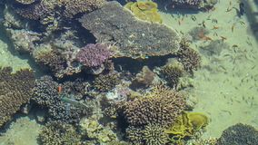 Shallow coral reef stock video