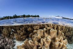 Shallow Coral Reef 4. Soft leather corals grow on a shallow sandy bottom in the Solomon Islands. This area of the South Pacific harbors a diverse array of Stock Photography