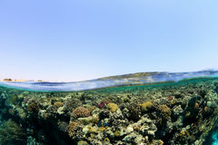 Shallow coral reef Royalty Free Stock Photography