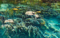 Shallow coral reef in turquoise transparent water, Indonesia Royalty Free Stock Image