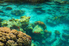 Shallow coral reef in turquoise transparent water, Indonesia. The gorgeous turquoise transparent water of the Malenge lagoon spotted by shallow coral reef Royalty Free Stock Images