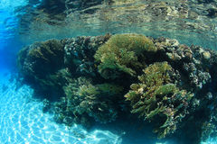 Shallow coral reef Royalty Free Stock Image