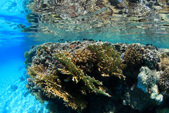 Shallow coral reef Royalty Free Stock Images