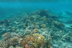 Shallow coral reef underwater sea Pacific ocean Royalty Free Stock Image