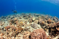 Shallow corals of the Sipadan Barrier Reef Royalty Free Stock Photography