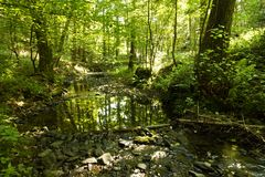 Shallow creek in a forest. With bright sunlight, summer scene Royalty Free Stock Photography