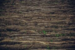 Shallow depth of field image of tilled soil at a farm