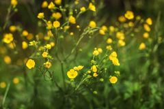 Shallow depth of field only one blossom in focus photo - yello stock images