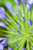 Shallow depth of field of plant's stamen Stock Photo