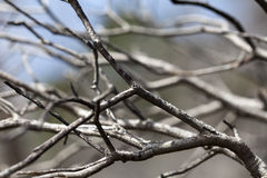 Dry Branches Abstract Royalty Free Stock Photo