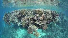 Shallow, Diverse Reef stock video footage