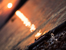 Shallow DOF: driftwood laying on the Danube river shore, beautiful sunset. Royalty Free Stock Image