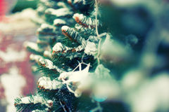Shallow DOF image of twigs of evergreen tree Royalty Free Stock Images