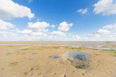 Shallow at dutch wadden sea Royalty Free Stock Images