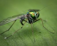 Shallow Focus of Gray and Green Insect Stock Photo