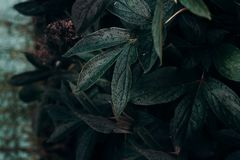 Shallow Focus Photo of Green Plant Royalty Free Stock Photography