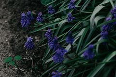 Shallow Focus Photo of Green Plant With Purple Flowers stock photos