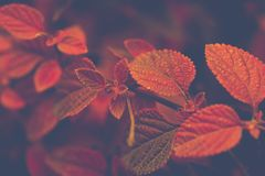 Shallow Focus Photo of Red and Brown Leaves Stock Photos