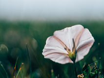 Shallow Focus Photograph of White Petal Flower Stock Photography